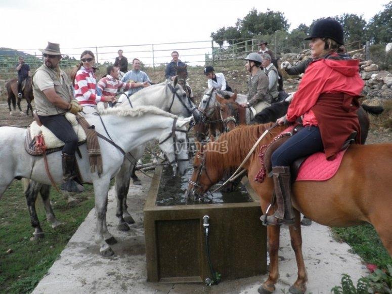 Refrescando a los caballos
