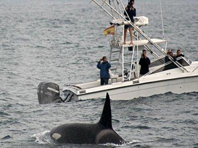 Nature Tarifa Avistamiento de Cetáceos