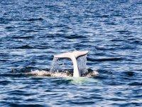 观鲸海豚从海里