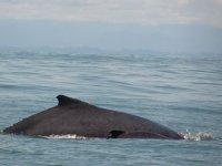 从岩石出了一口气看完鲸类的看着尾巴