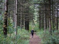 在树林中漫步