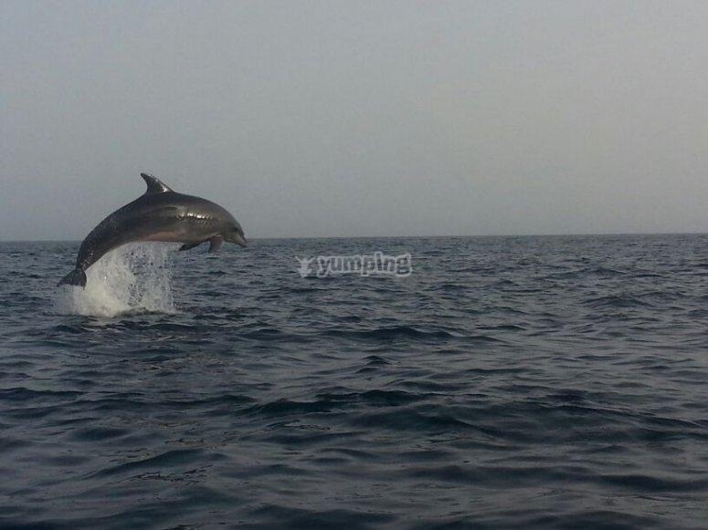 Posibilidad de ver delfines
