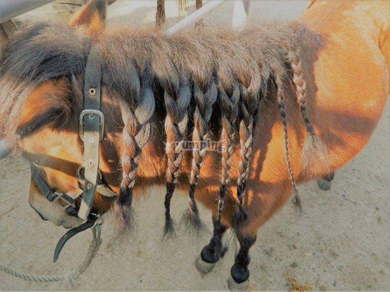 Impareranno a pettinare i cavalli