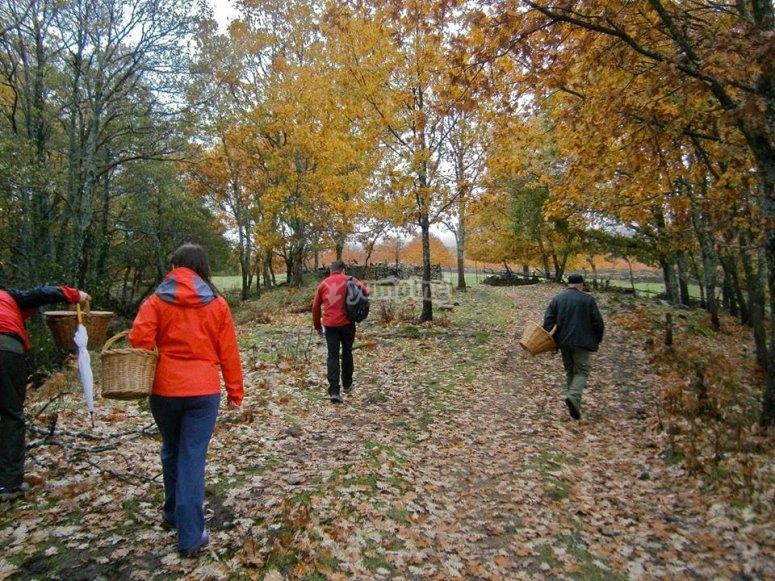 Excursion para recolectar cerezas