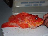 pez naranja