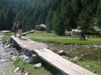 Sendero sobre la pasarela de madera