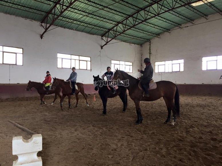 Profesores de equitacion expertos