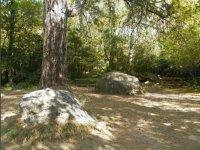 Camoamento de ingles en la naturaleza
