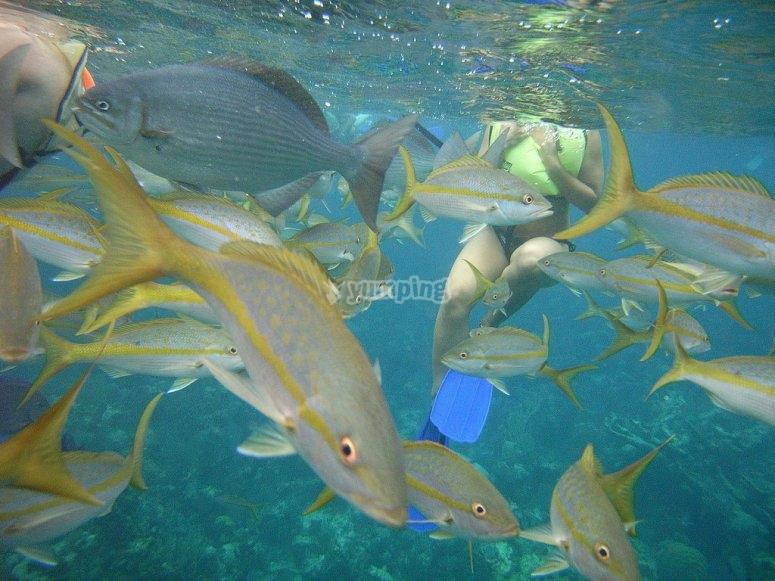 与鱼群学校