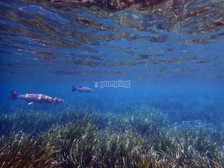 Snorkel in Tabarca