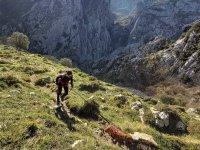 Senderismo en la Cordillera Cantábrica con el perro