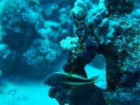 Camuflage acuatico