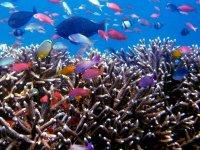 Miles de colores en corales