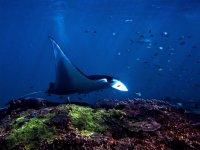 Paisajes subacuaticos