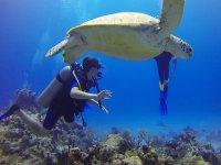 Tortugas marinas durante buceo