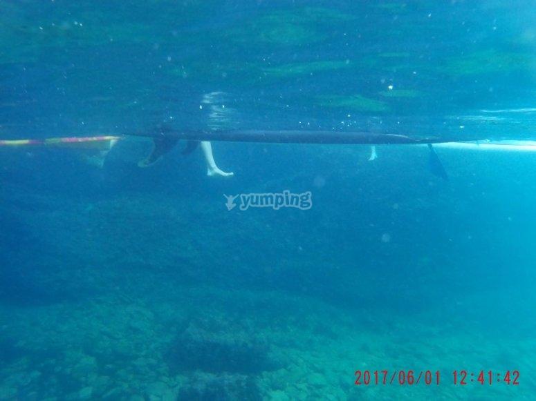 Vista submarina