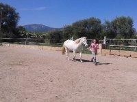 guiando al caballo