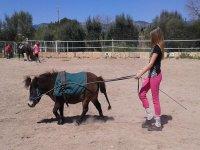 llevando al caballo