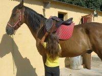 Colocando la silla al caballo