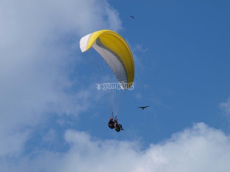 volando con buitres