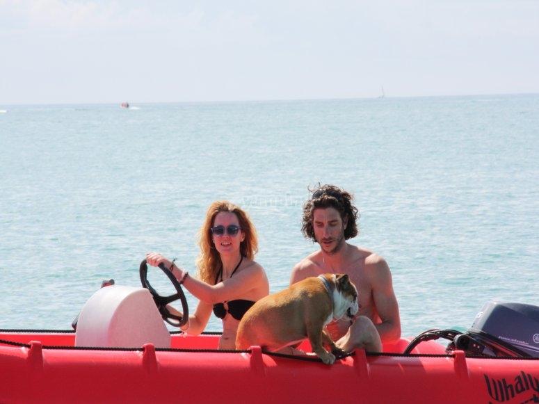 Se admiten perros a bordo