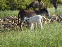 Merece la pena ver a los burros