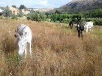 Paseos en burro en Alicante