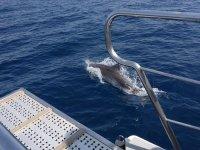 Simpático delfín al lado del barco