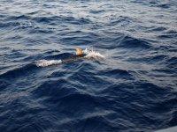 Delfín nadando en libertad