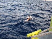我们的船旁边的海豚
