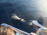 从船上观看鲸鱼