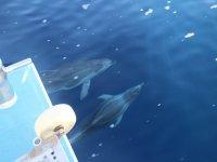 我们旁边游泳的几只海豚