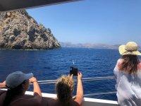 用相机准备拍摄海豚的影像