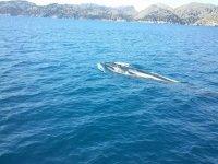 鲸鱼在船旁游泳