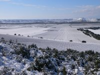 View of the snowy vineyard