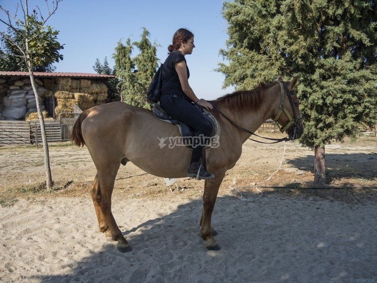 At the horse riding arena