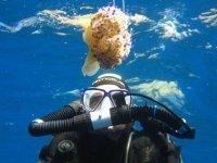 Bajo la medusa