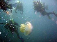 Buceando con medusa