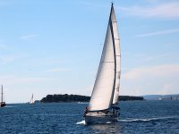 Sailboats sailing in the sea
