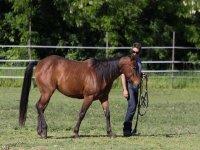 Paseos tranquilos a caballo