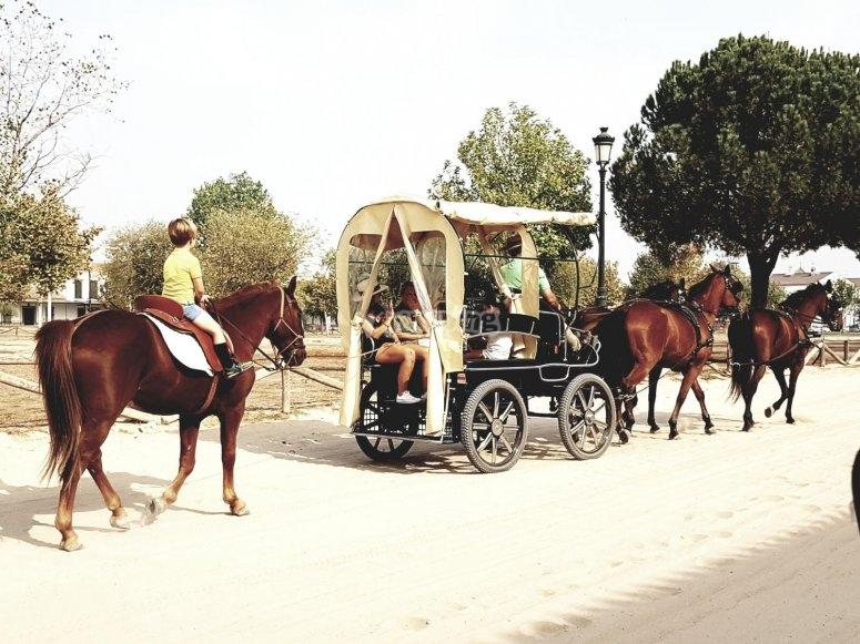 combinada caballo y carruaje