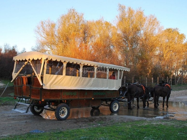 Guided horse carriage tour