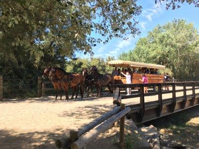 Visita El Rocío en coche de caballos 90 minutos