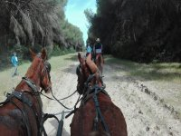 Visit in a Shared Horse Carriage Around Doñana