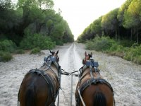 Doñana tour Private Horse Carriage 2,5 h