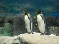 认识Faunia penguins.jpg