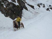 Passeggiando sulla neve a cavallo