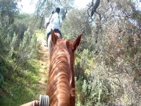 On the roads on the horses