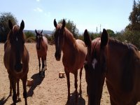 Some of our beautiful horses