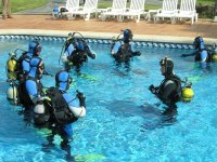 learning to dive in a group